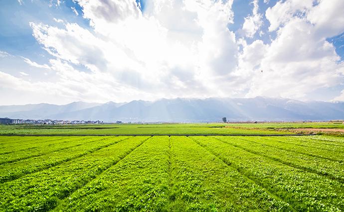 Земельна реформа: сім порад для керівників громад, як скористатися новими  можливостями | Економічна правда
