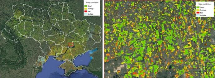 Стан посівів озимих культур в регіонах України
