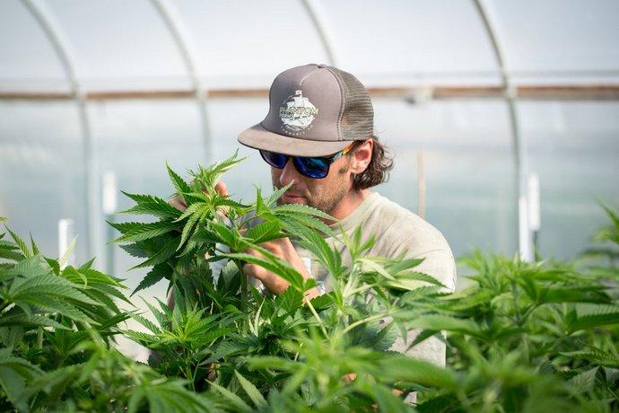 В Україні вперше легально виготовлятимуть продукти з марихуани