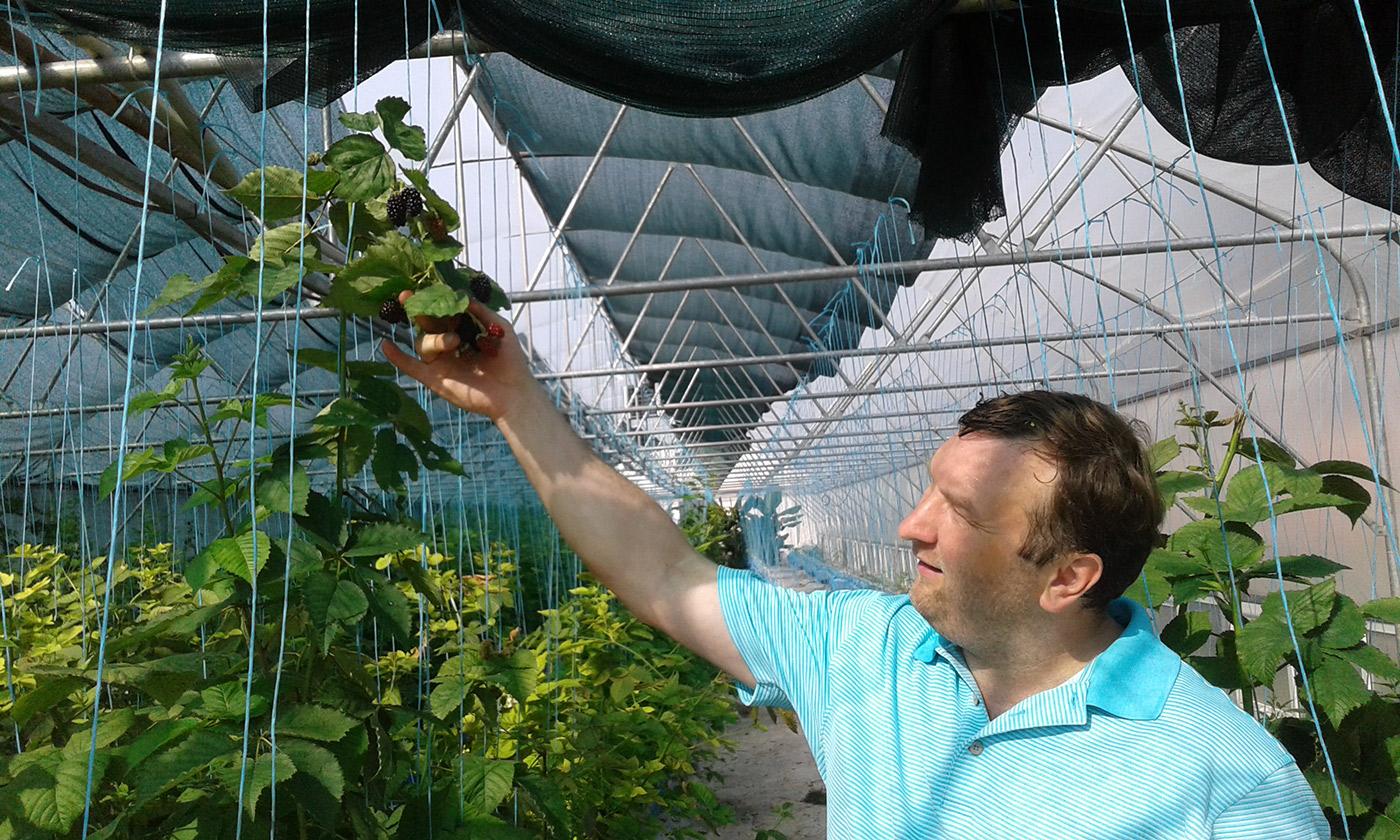 Вадим Цураль проводить екскурсію теплицею, де росте гігантська ожина